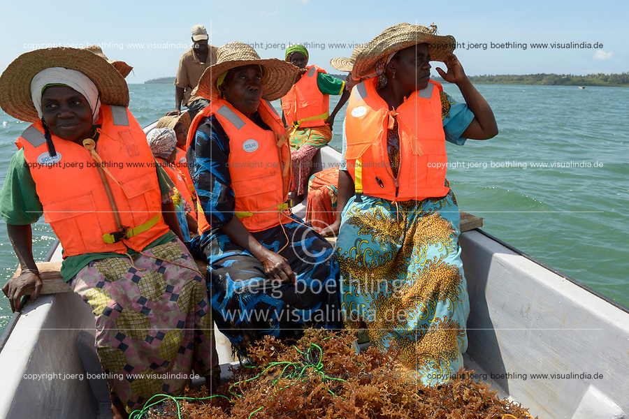 TANZANIA, Zanzibar, due to climate change and rising water temperatures seaweed farmer have shifted to plant red algae farming in deep water, women with lifejacket going by boat to plant seaweed seedlings in deep water