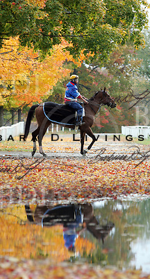 Oklahoma track, October 2004. Saratoga Race Course, Saratoga Racetrack, beautiful horse racing, Thoroughbred racing, horse, equine, racehorse, morning mood