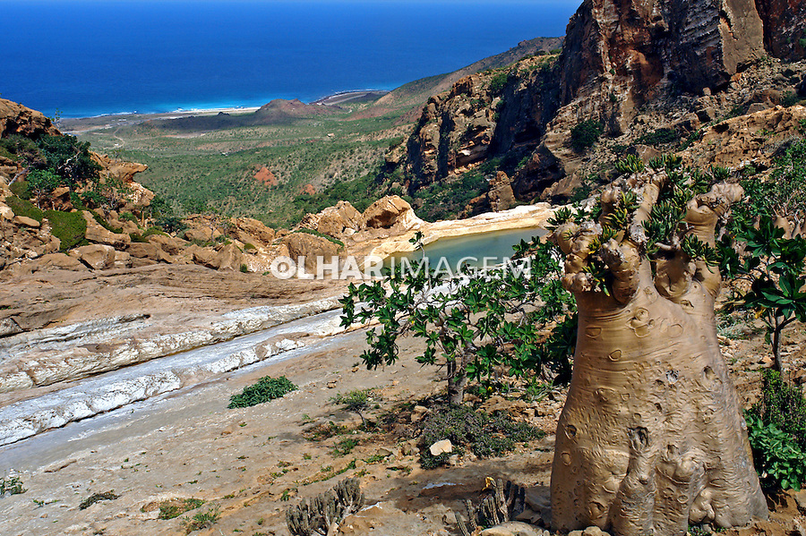 Reserva Homhil. Ilha de Socotra. Yemen. 2008. Foto de Caio Vilela.