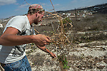 Yosef maintains his vineyard, close to his house in the unauthorized Israeli settler-outpost of Chavat Gilad, West Bank.