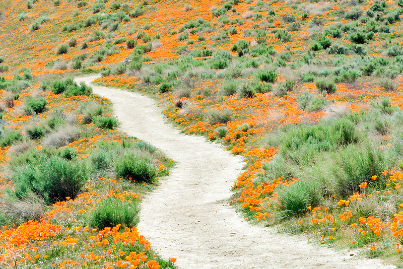 Path through Antelope Valley Poppy Preserve, California