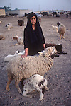 Marsh Arabs. Southern Iraq. Circa 1985. Marsh Arab teenage girl tending flock of sheep and goats. Family farm in background.