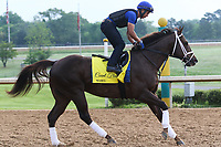 HOT SPRINGS, AR - April 14: Count Fleet contender Wabel gallops at Oaklawn Park on April 14, 2017 in Hot Springs, AR. (Photo by Ciara Bowen/Eclipse Sportswire/Getty Images)