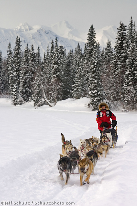 Paul Gebhardts sled dog team on trail near Finger Lake Chkpt Finger Lake 2006 Iditarod Alaska Winter