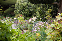California cottage garden textures in mixed border with Hydrangea (Lacecap on left; Oakleaf on right) in foreground, foxglove, geranium and Pittosporum in background.
