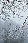 Hoarfrost and fog