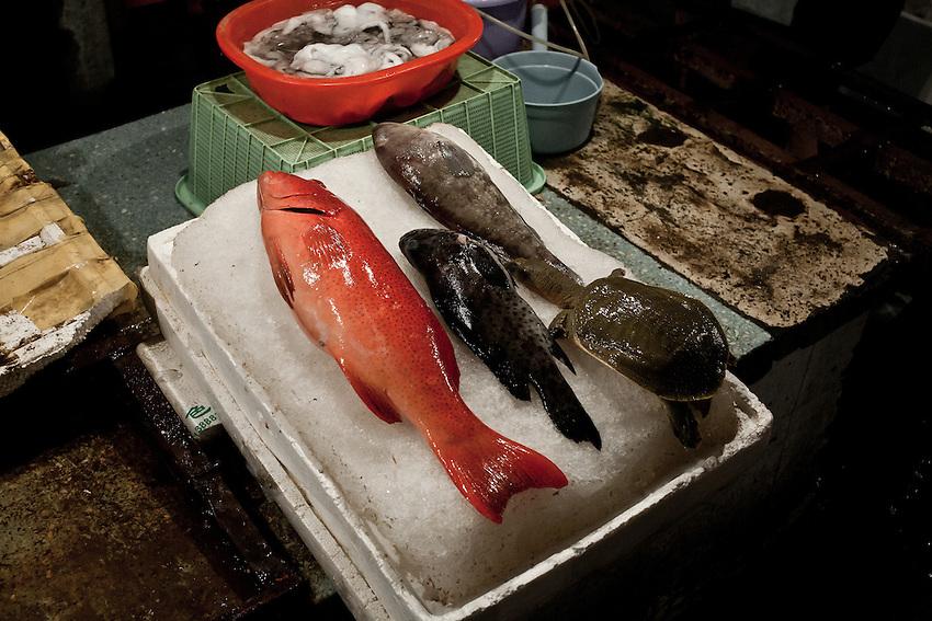 Trois poissons morts et une tortue