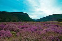 Glen Feshie, Cairngorm National Park