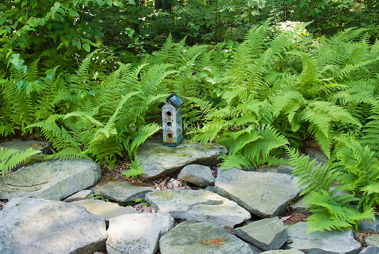 """Bird house with hayscented Dennstaedtia punctilobula, the hay-scented ferns, natural stone, shade garden, says """"Welcome"""" on front and """"Feather Bed Inn"""" on side, blue tall birdhouse"""