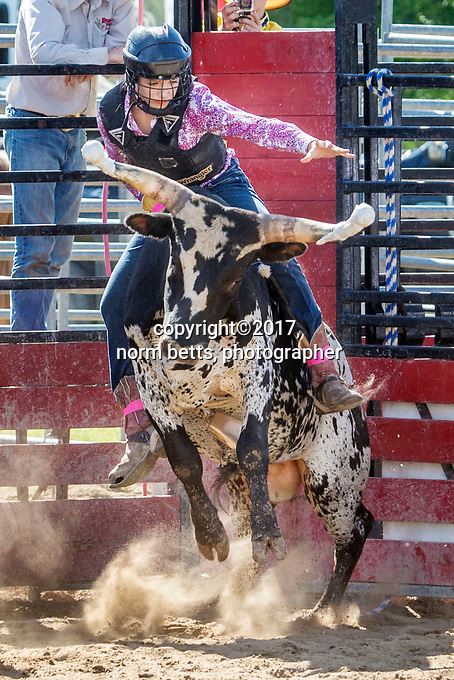 MINDEN, Ontario, Canada --- 24&amp;25 June'17<br /> The RAM Rodeo tour stops in Minden, Ontario Canada<br /> <br /> <br /> photos by Norm Betts<br /> normbetts@canadianphotographer.com<br /> &copy;2017, Norm Betts, photographer<br /> 416 460 8743