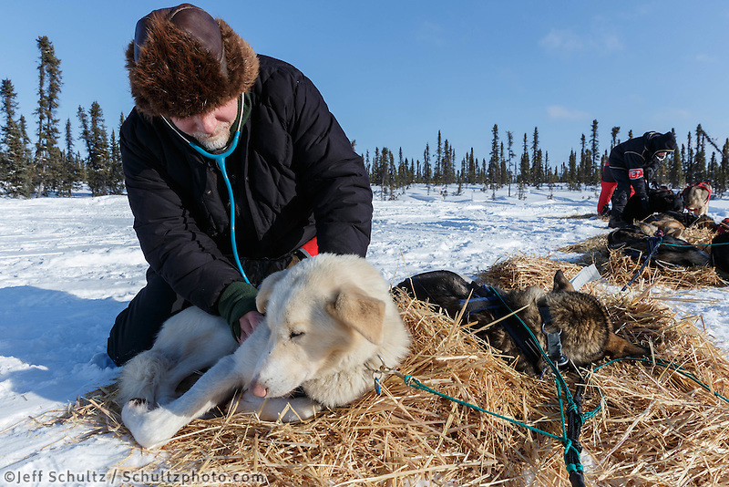 Volunteer veterinarian Paul Pifer examines a Ray Redington Jr. dog at the Cripple checkpoint, Thursday, March 6, during the Iditarod Sled Dog Race 2014.<br /> <br /> PHOTO (c) BY JEFF SCHULTZ/IditarodPhotos.com -- REPRODUCTION PROHIBITED WITHOUT PERMISSION