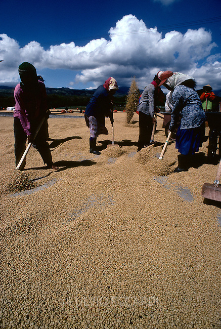 Indonesia, Java, coffee, coffea, organic, beans, process, dry, turn, patio, worker, man, men, woman, shovel