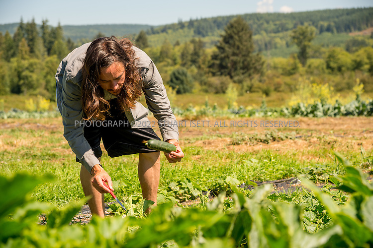 8/12/2016-- Mount Vernon, WA, USA<br /> <br /> Staff from the Schultz Family Foundation visit the Growing Veterans farm in Mt. Vernon, Washington, about an hour north of Seattle.<br /> <br /> <br /> Here, veteran Justin Blotsky, 33, works on teh farm.<br /> <br /> From http://growingveterans.org:<br /> <br /> &ldquo;Since 2012, Growing Veterans has been combining veteran reintegration with sustainable agriculture. Our unique model addresses the growing desire for alternative therapies for Post-Traumatic Stress (PTS) and Traumatic Brain Injury (TBI), as well as suicide prevention through peer-support and Applied Suicide Intervention Skills Training (ASIST) certification. We encourage continued service through volunteerism, and collective impact through collaboration with other local, regional, and national stakeholders.&nbsp; We provide opportunities for vets in transition to develop their resumes and identify how to translate skills learned in the military to new roles in the civilian sector. Further, our vets serve as leaders in the important movement toward sustainable agriculture&rdquo;<br /> <br /> Photograph by Stuart Isett. &copy;2016 Stuart Isett. All rights reserved.