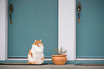 Cat in front of Two Blue Doors