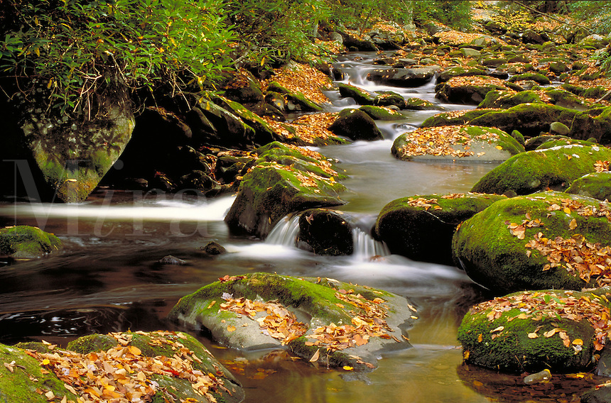 Mountain stream flowing over moss covered rocks decorated with golden yellow autumn leaves. fall foliage, peaceful, tranquil, landscape. mountain stream, rocks, water. Tennessee.