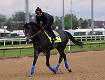 April 28, 2019 : Roadster trains at Churchill Downs, Louisville, Kentucky, in preparation for the Kentucky Derby. Owner Speedwell Stable LLC, trainer Bob Baffert. By Quality Road x Ghost Dancing (Silver Ghost) Mary M. Meek/ESW/CSM
