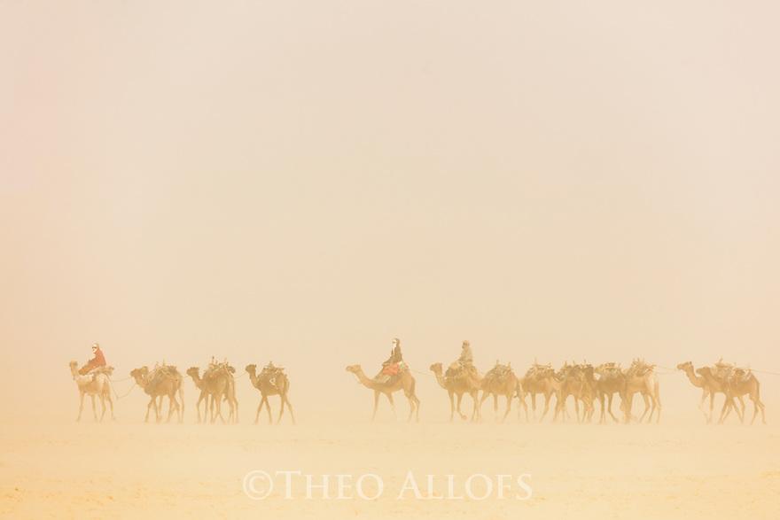 Chad (Tchad), North Africa, Sahara, Borkou District, camel caravan in sand storm, camels are transporting salt