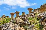 Temple Ruins, Agrigento, Sicily