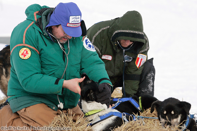 Veterinarians Glenn Cantor (L) and Dennis Griffin check Martin Buser's dogs at the White Mountain checkpoint on tuesday afternoon.