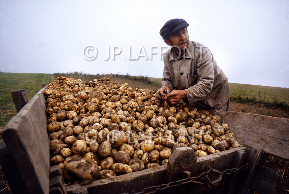 Poland, September, 1981 - Farmers in the Torun region gather potatoes. Many crops grow well in the rich soil of Poland, however the Poles rarely enjoy a bountiful harvest. The USSR appropriates most of the crops and send them to other areas, leaving only meager rations behind for Polish farmers.<br /> Pologne, septembre 1981 &ndash; Les fermiers de la r&eacute;gion de Torun r&eacute;coltent leur pommes de terre. Les r&eacute;coltes sont g&eacute;n&eacute;reuses, le sol polonais est fertile et le climat cl&eacute;ment. Mais l&rsquo;URSS redirige ces biens vers d&rsquo;autres directions ne laissant que de maigres stocks &agrave; la population locale. M&ecirc;me chose pour le lait et la viande.