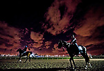 HALLANDALE BEACH, FL - JANUARY 25: Horses exercise on the track during morning workouts as horses prepare for the Pegasus World Cup Invitational at Gulfstream Park Race Track on January 25, 2018 in Hallandale Beach, Florida. (Photo by Scott Serio/Eclipse Sportswire/Breeders Cup)