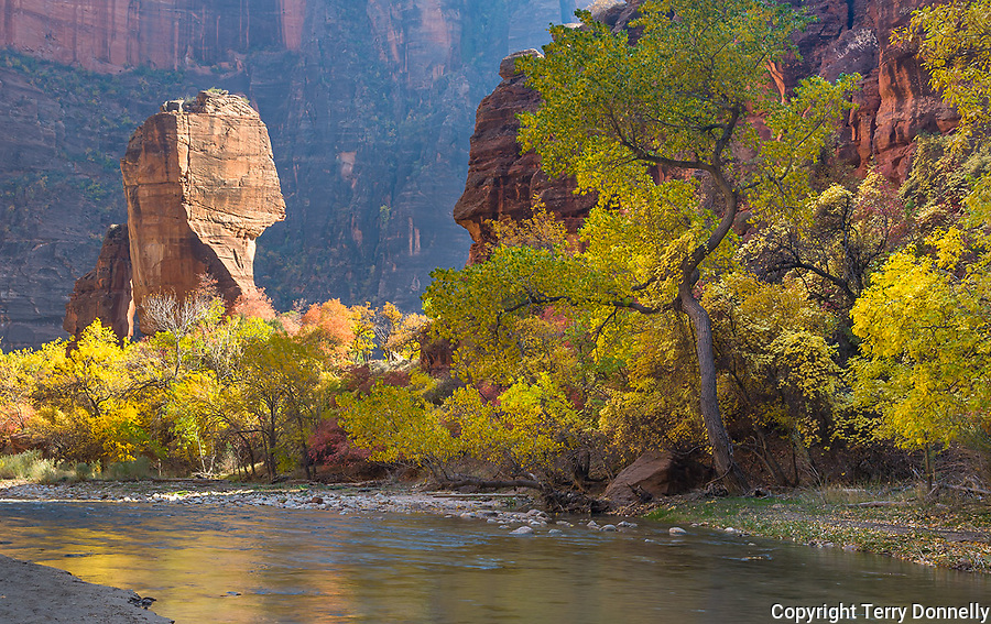Zion National Park, UT<br /> The Pulpit stands in the Temple of Sinawava in Zion Canyon with fall colored cottonwood trees (Populus fremontii) along the Virgin River