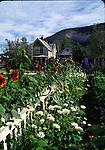 Garden in Dawson City