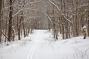 Snow covered Notchway Trail. The Notchway Trail is the main trail of the Lafayette Ski Trails and follows the old Route 3 between Route 141 and Route 18 in the town of Franconia, New Hampshire.