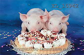 Interlitho, Alberto, ANIMALS, pigs, photos, 2 pigs, cake(KL15942,#A#) Schweine, cerdos