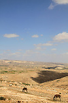 Judea, Southern Hebron Mountain, a view in the vicinity of biblical Carmel