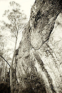 Image Ref: T052<br /> Location: Snowy River NP, Victoria<br /> Date: 21st May 2014