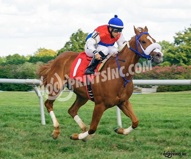 My Enigma winning at Delaware Park on 9/3/16