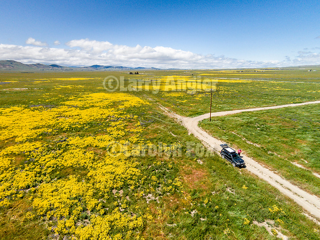 California Valley wildflowers, hills, dirt roads in spring from a DJI drone