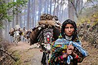 Van Gujjar Migration