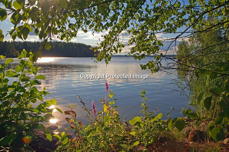 Afternoon Light on Sääksjärvi Lake during Finland Summer