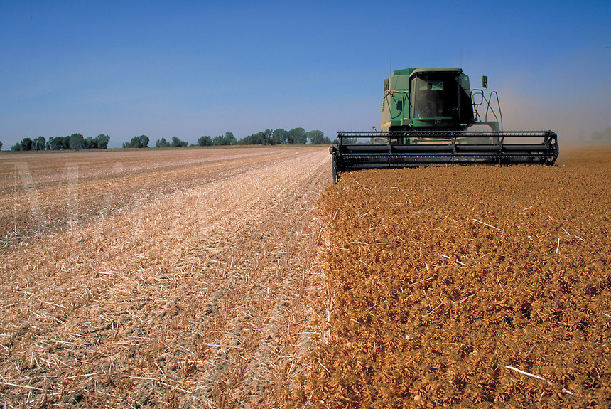 green harvester working in field of safflower. California.