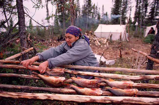 Cree woman, Elizabeth Brien, preparing to smoke white fish on racks at a camp. Quebec, Canada.