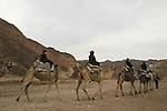 Israel, Eilat Mountains, camel riding in Nahal Shlomo