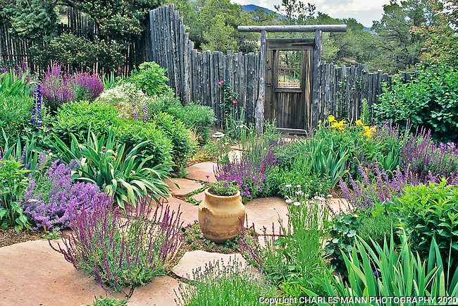 Landscape Architect and garden dseigner Catherine Clemens concieved and created this colorful and drought tolerant xeriscape garden and home landscape scheme at her home in Santa Fe, New Mexico.