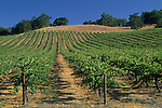 Vineyards along Chimney Rock Road, Paso Robles, San Luis Obispo County, California