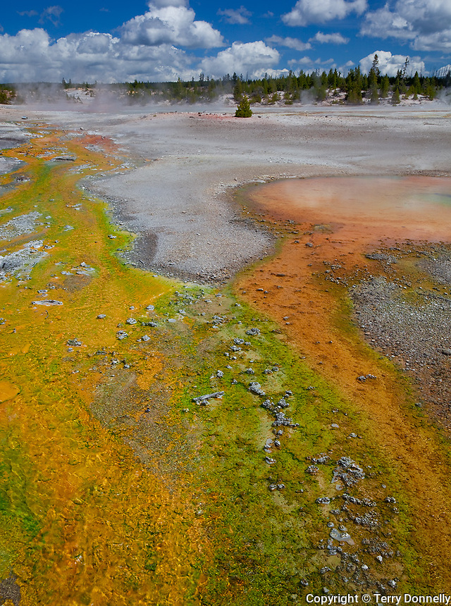 Yellowstone National Park, WY <br /> Streaming hot water flows over colorful thermophilic organisms in the Porcelain Basin, Norris Geyser Basin