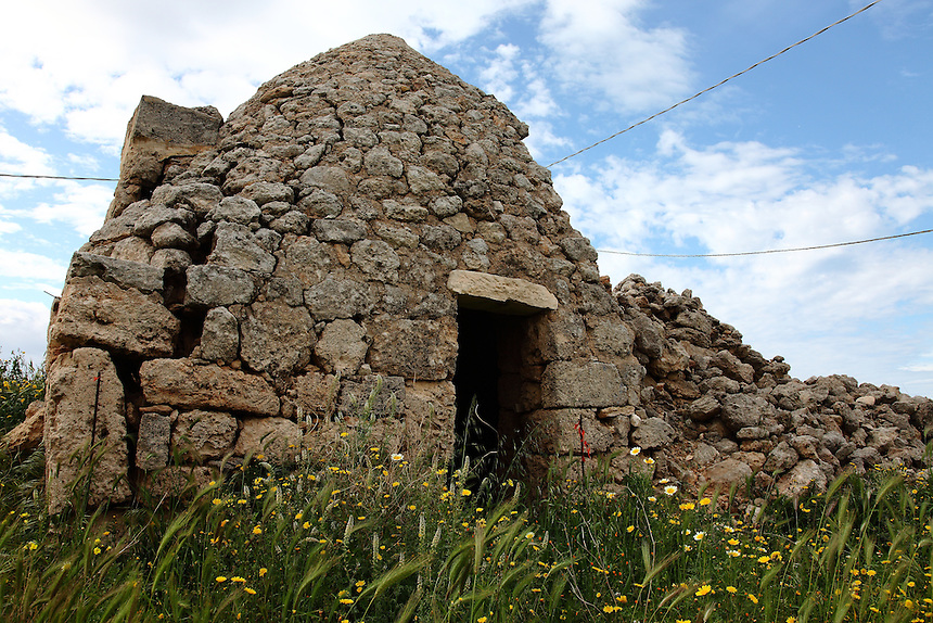 Fasano: Near the remains of the ancient Egnazia, an old trullo that was still partially upright. One can notice its characteristic conical roof and its characteristic entrance. The sky is partially clouded, but the beautiful colours of the stones of the ancient dwelling kind are enhanced by the contrast with the yellow flowers in the grassland in front of it.<br /> <br /> You can download this file for (E&amp;PU) only, but you can find in the collection the same one available instead for (Adv).