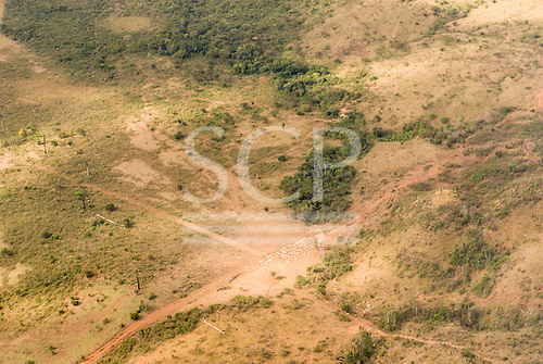 Pará State, Brazil. Aerial view of rain forest with cleared cattle pasture and cattle in a hilly area.