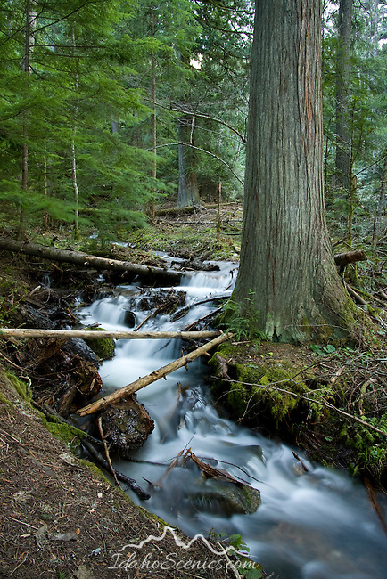 Small cascade on a seasonal forest stream in spring. Hayden, Idaho