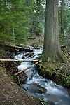 Small cascade on a seasonal forest stream in spring. Hayden, Idaho