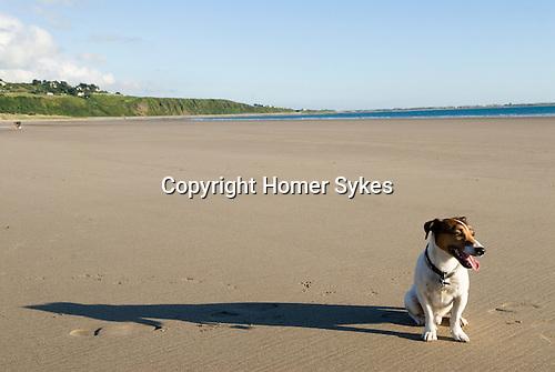 Brendan, Harlech beach Gwynedd North Wales UK.