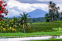 Bali, Tabanan, Kerambitan. Gunung Batukau seen from Kerambitan. Usually the mountain is covered by clouds.