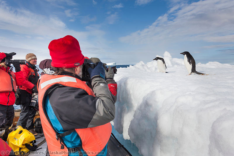 Photographers take pictures of Adelie penguins hauled out on floating icebergs near Paulet Island, Antarctic Peninsula.
