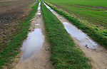 Puddles in farm track crossing fields, Alderton, Suffolk, England, UK