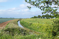 Farm drain with conseravtion headland - Lincolnshire, June